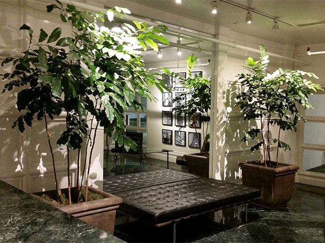 Indoor Plants Commercial building Beverly Hills