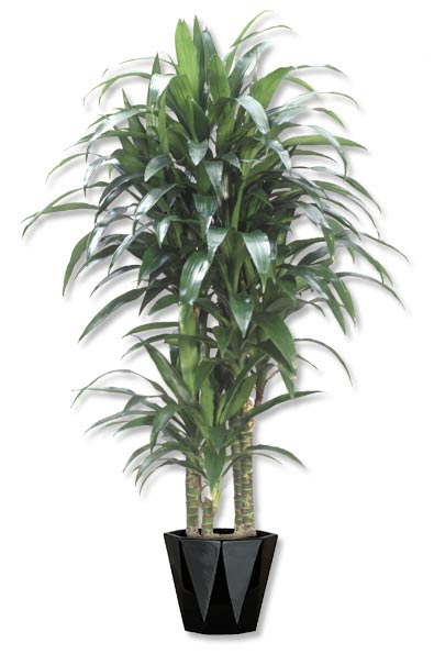 Indoor Plants For Office Amp Home Westside And Greater Los
