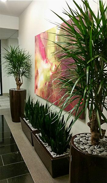 Custom Indoor Plant Design In Culver City Ca Office Building