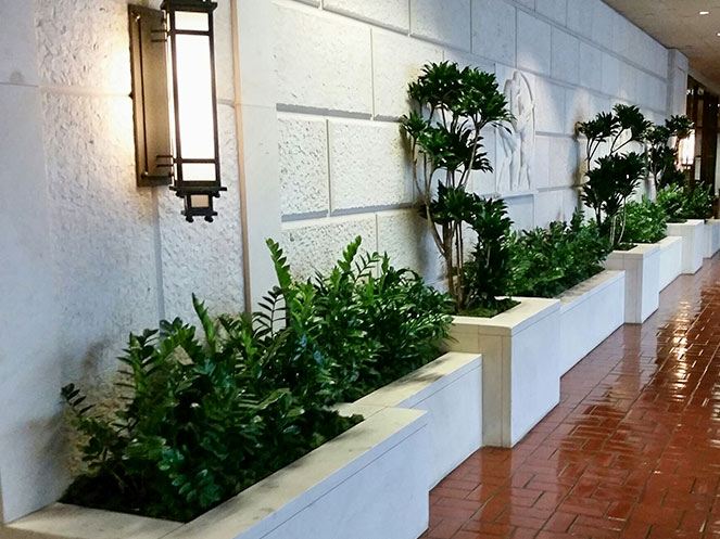 Interior Landscaping Beverly Hills area commercial building