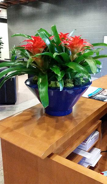Indoor Plant Design Marina Del Rey Office Building